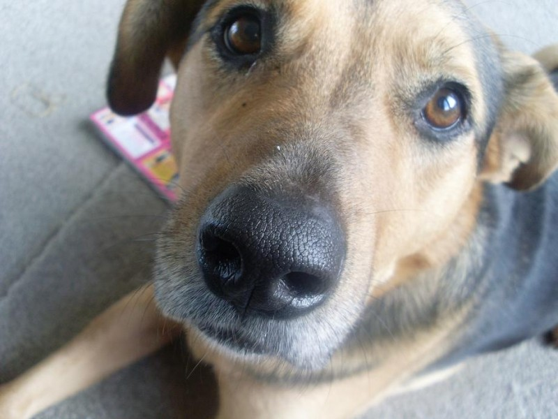 My dog Holly