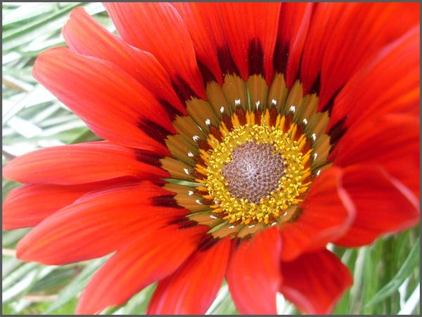 Close Up Red flower