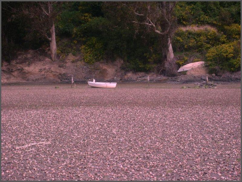 A boat at the Purakaunui Inlet