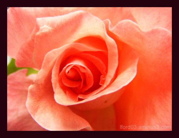 Rose at work