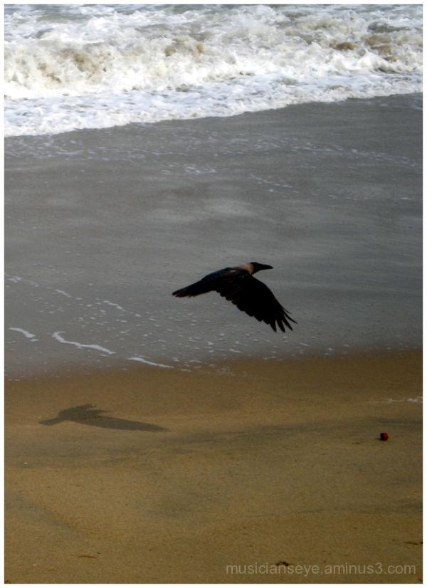 beach reconnaissance