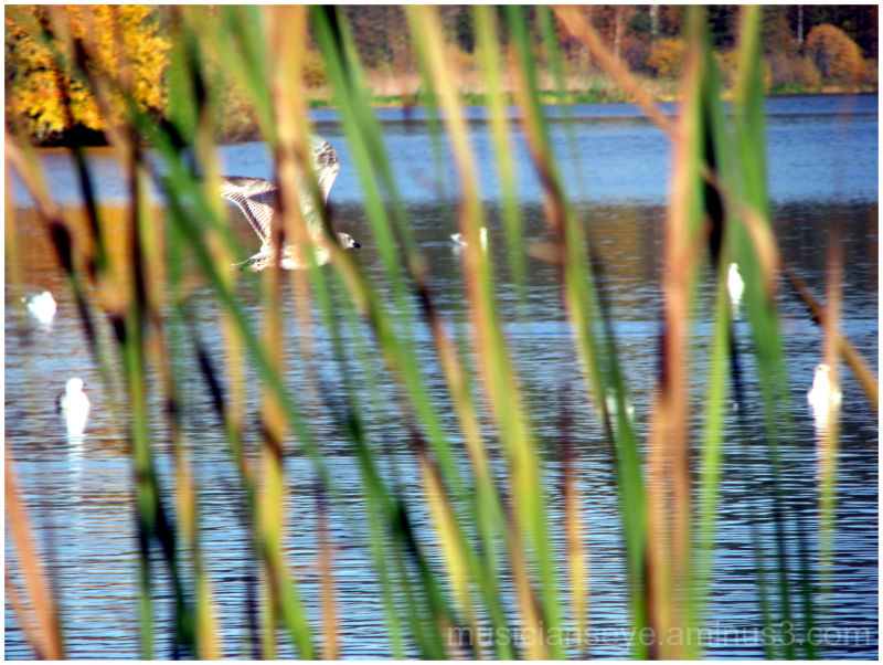 Beyond a curtain of reeds