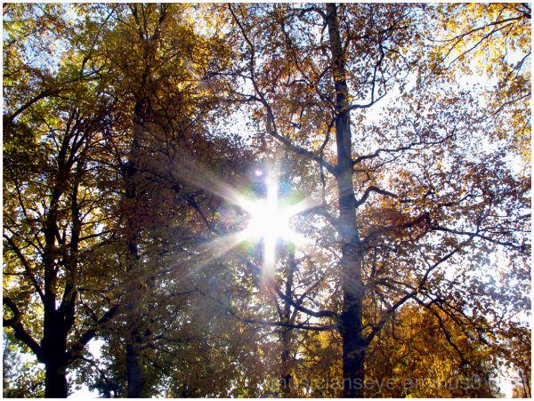 """Sun """"Fall"""" Colours"""