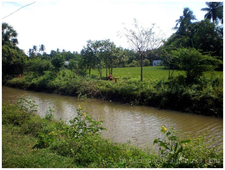 Southern Tamil Nadu Countryside