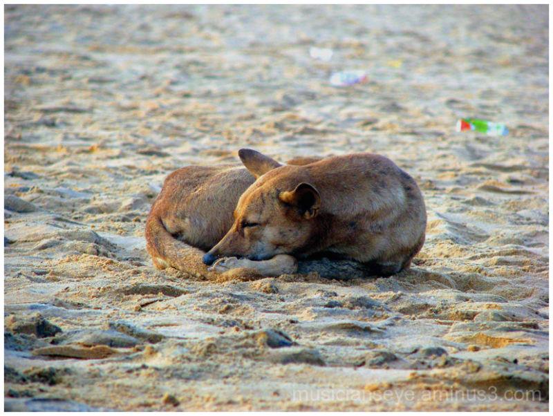 Captured at Shankhumukham beach, Trivandrum