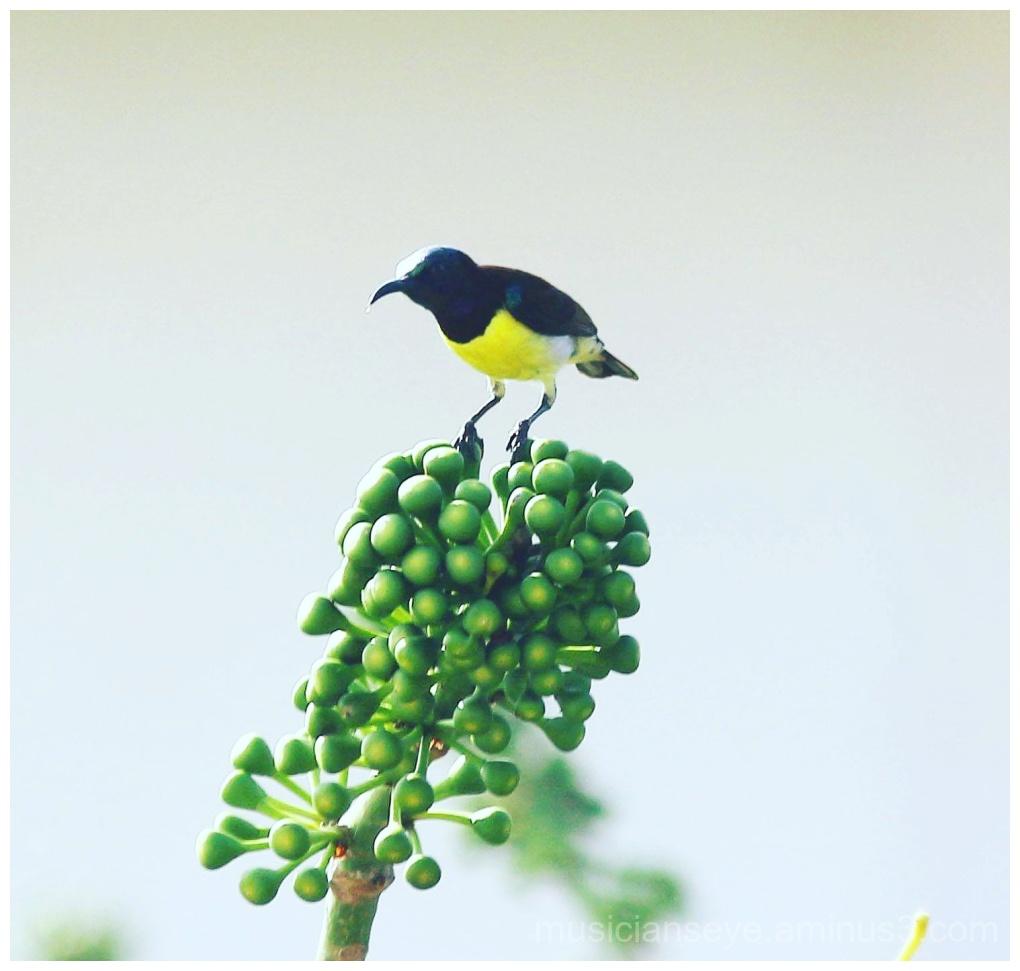 Lil birdie