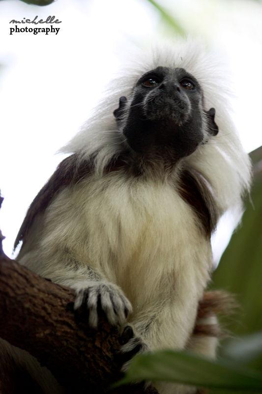 The Singapore Zoo: #1