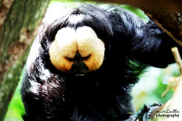The Singapore Zoo: #3