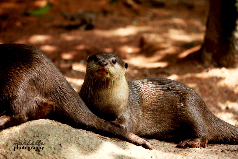 The Singapore Zoo: #5