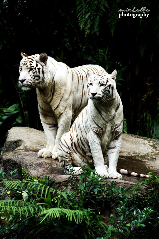 The Singapore Zoo: #7