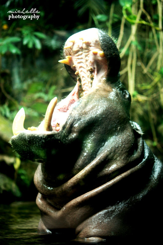 The Singapore Zoo: #8
