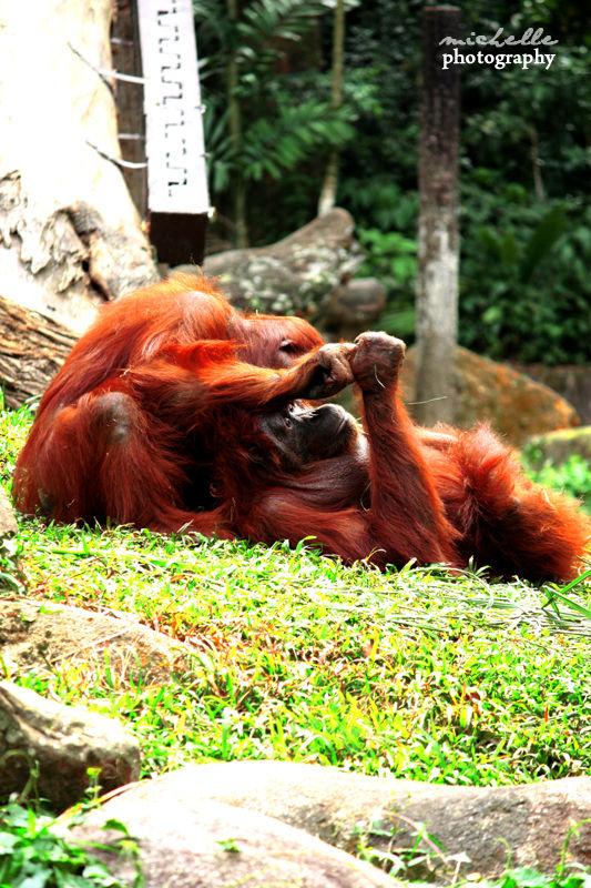 The Singapore Zoo: #9