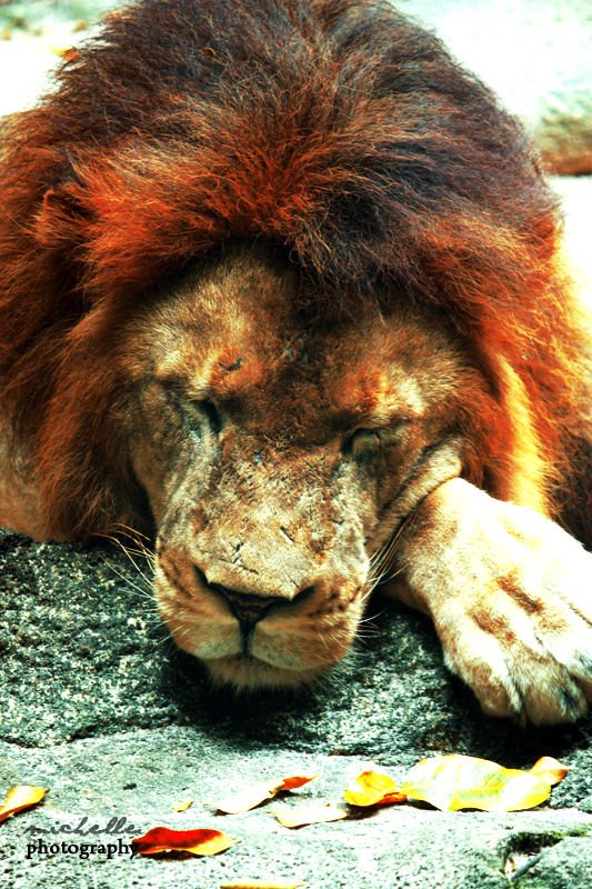 The Singapore Zoo: #12