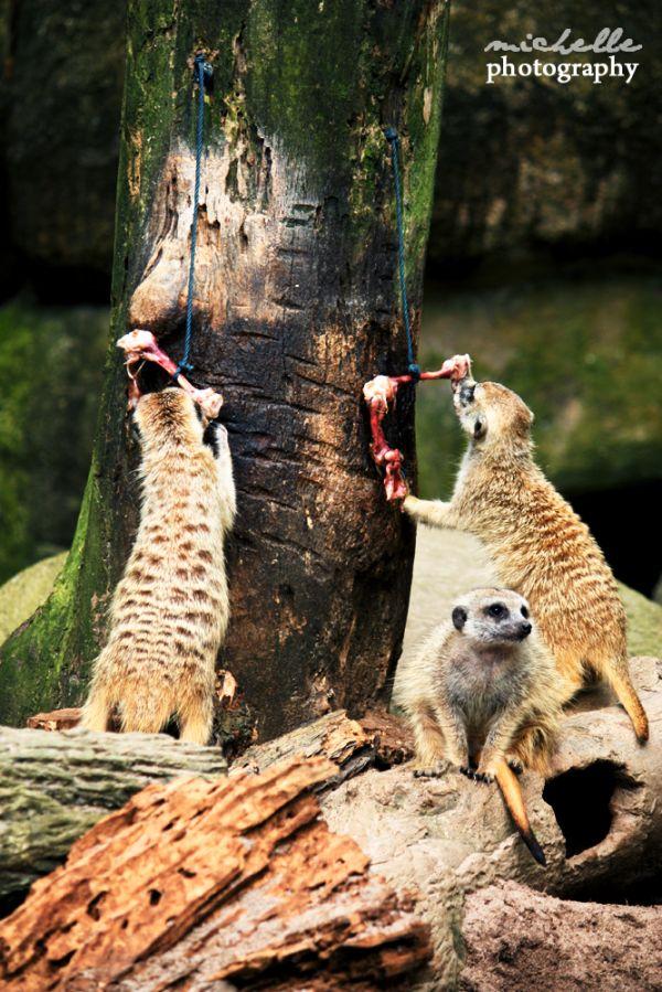 The Singapore Zoo: #13