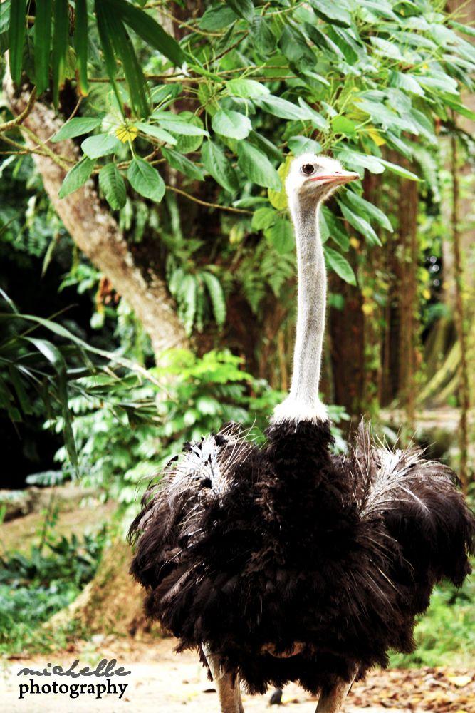 The Singapore Zoo: #14