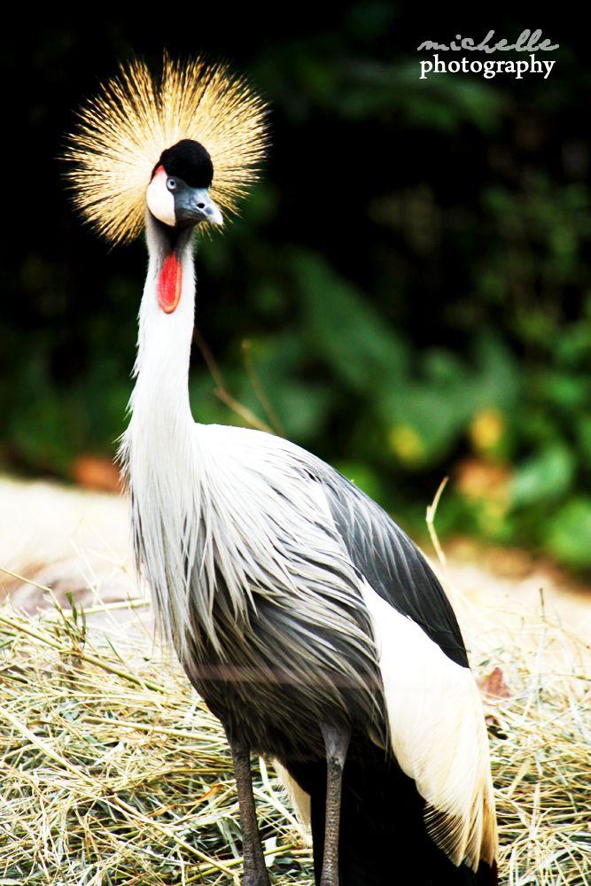 The Singapore Zoo: #15