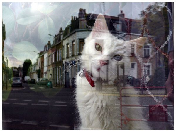 Cat behind the window 2