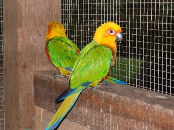 coloured birds