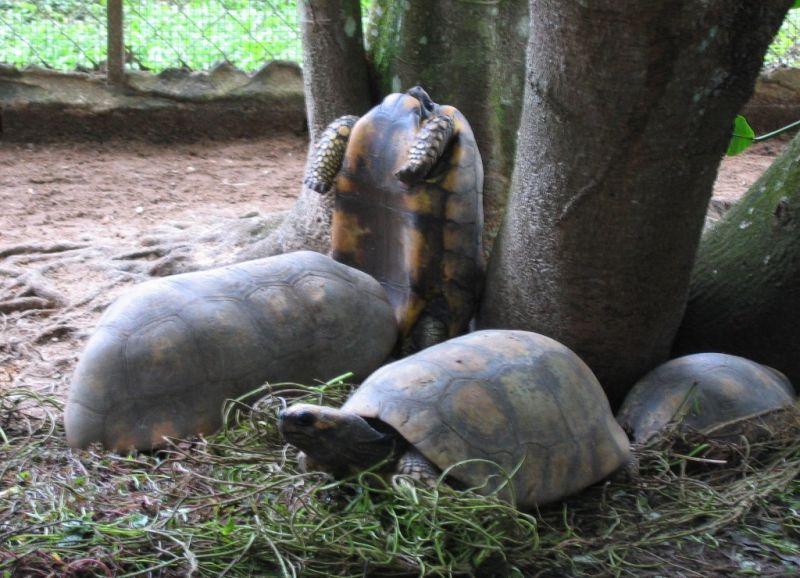 funny turtles in love