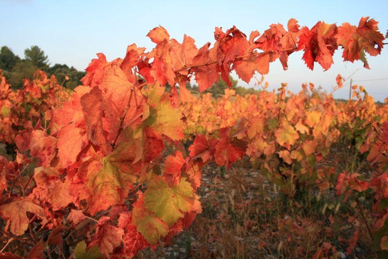 other variation of autumn