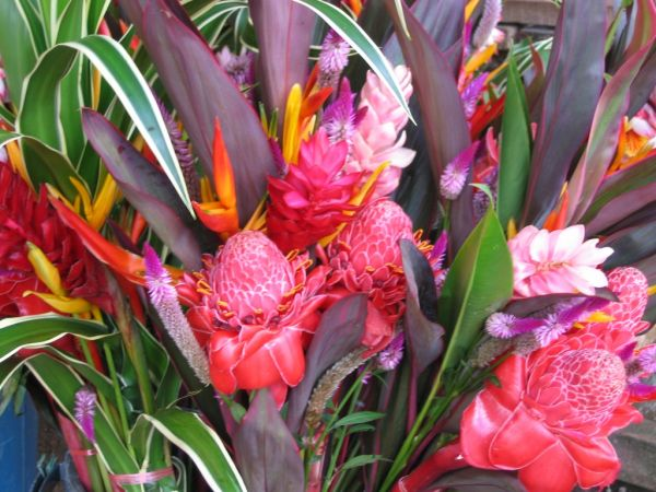 french guiana's flowers, for you ;)