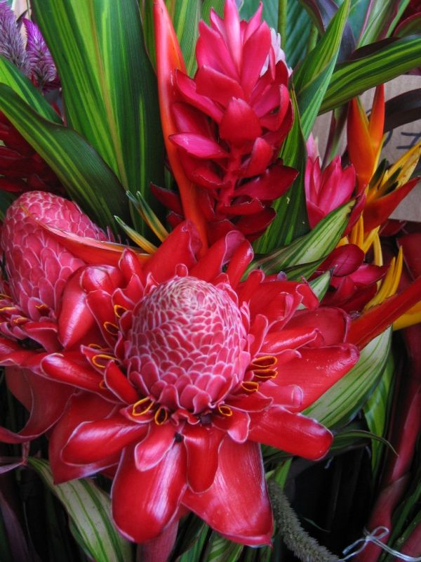 other french guiana's flowers