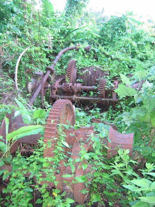 Au milieu de la forêt, des vestiges