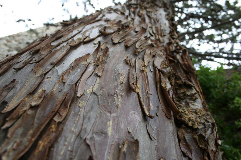 écorce d'arbre (détail 2)