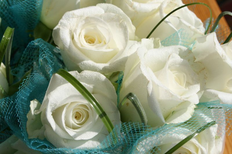Roses blanches au tulle bleu