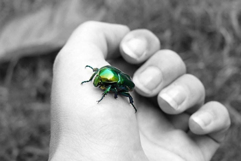 Espèce d'insecte!