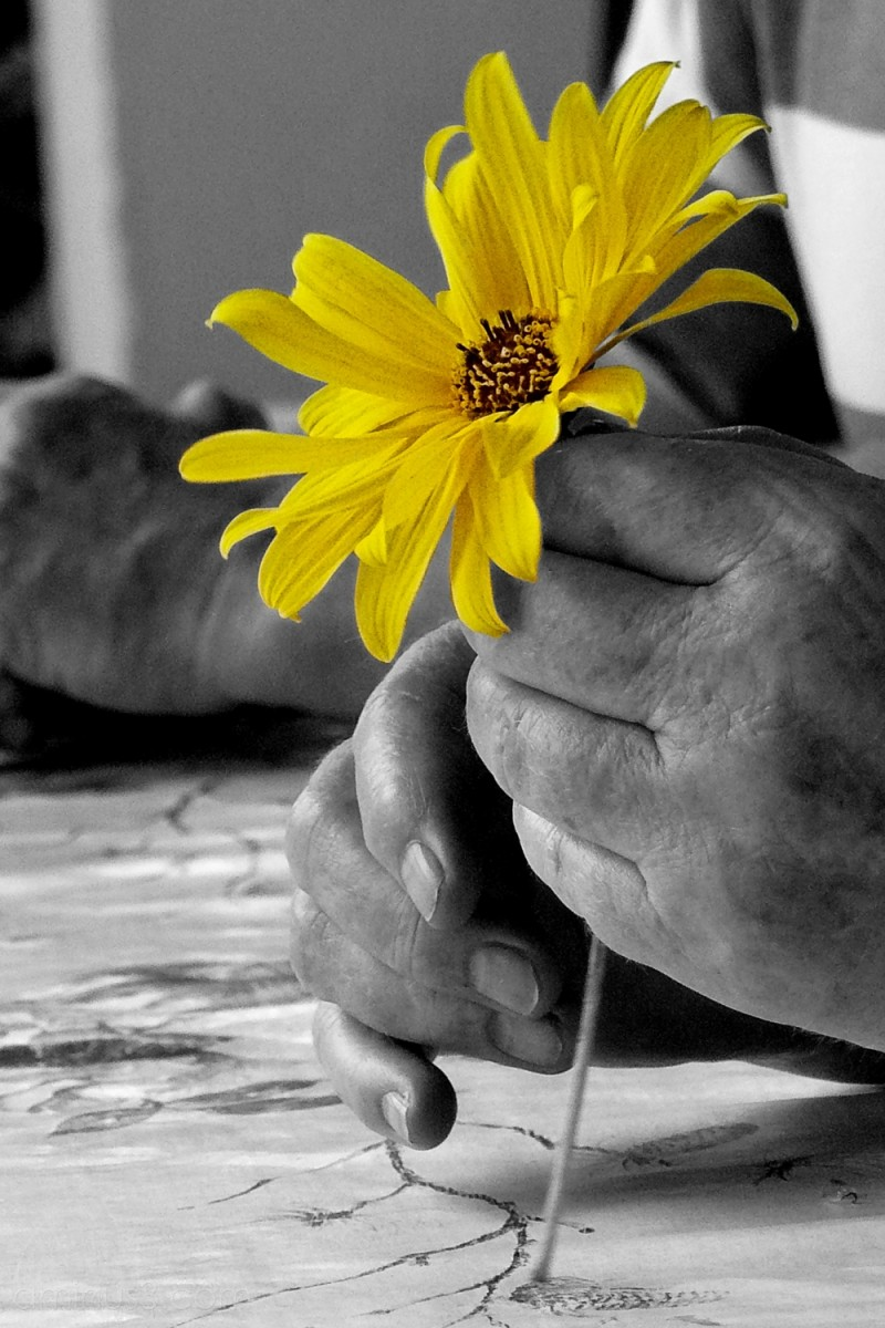 Le retour de la fleur jaune!