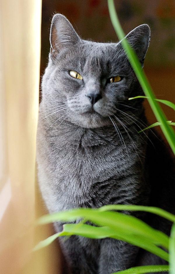 Le retour du Chat.
