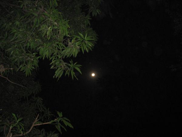moon mumbai
