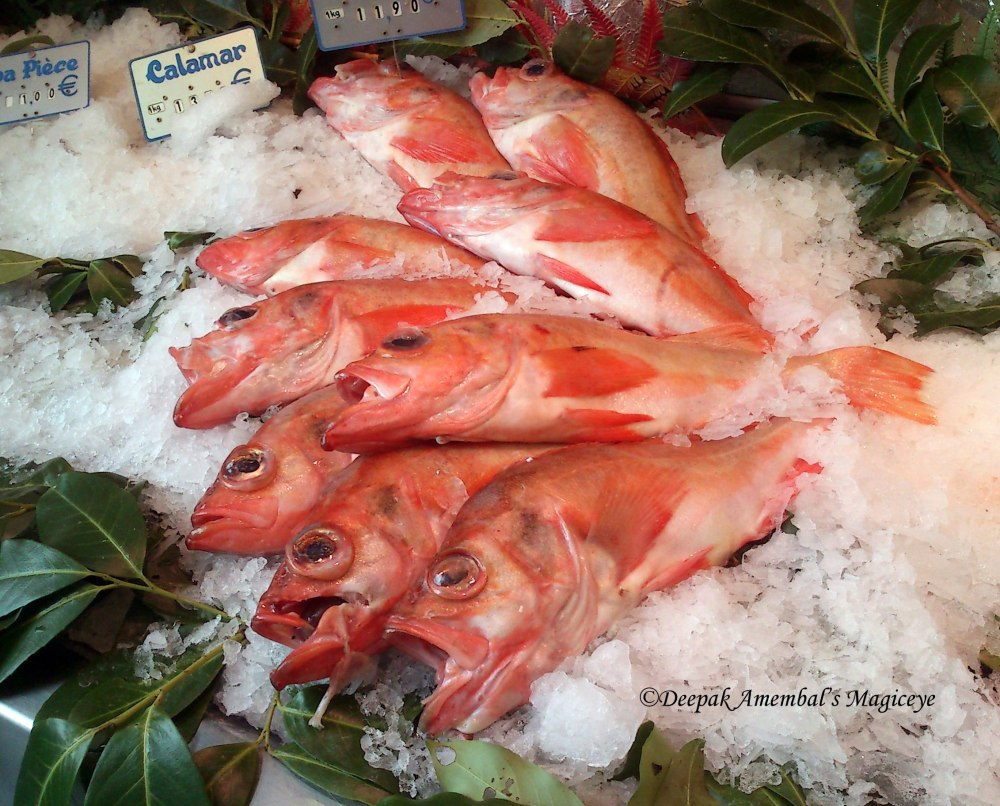 Red Fish on sale