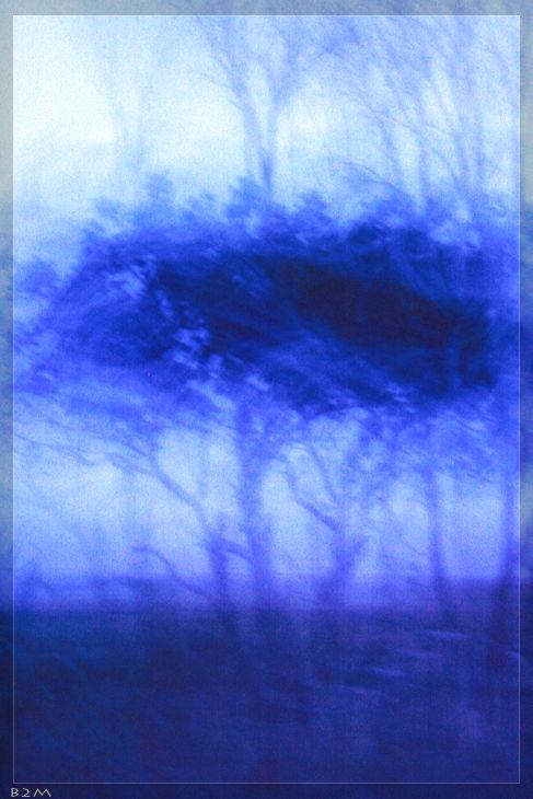 TREES SYMPHONY