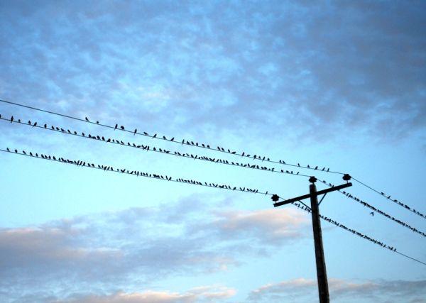 birds on wires!