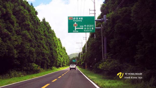 jeju korea landscape road tree green canon car