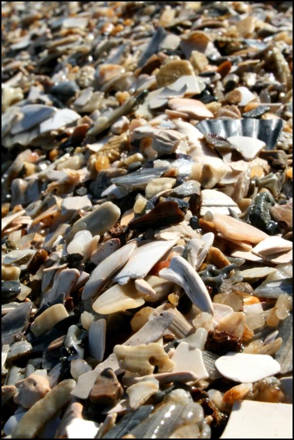Broken shells on the beach