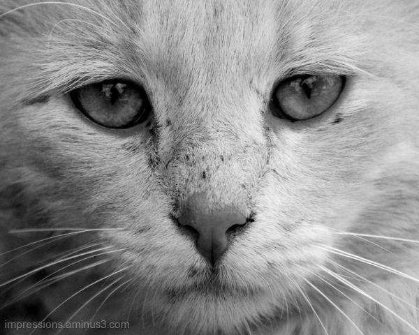 focused eyes,...