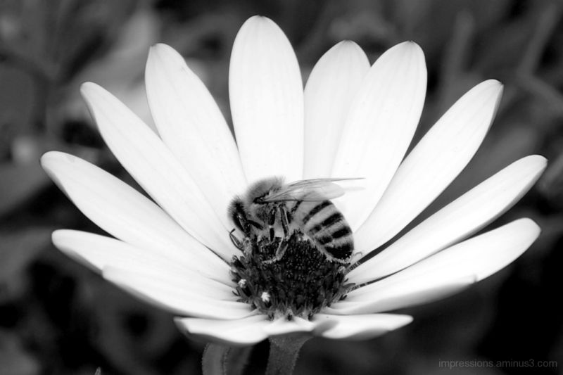 busy bee,...