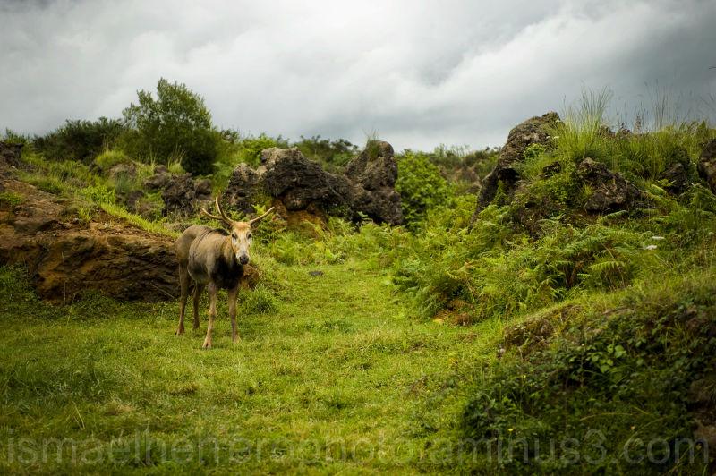 Parque Nacional de Cabarceno (Cantabria)