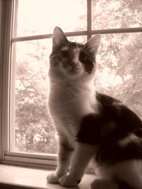 Callie.