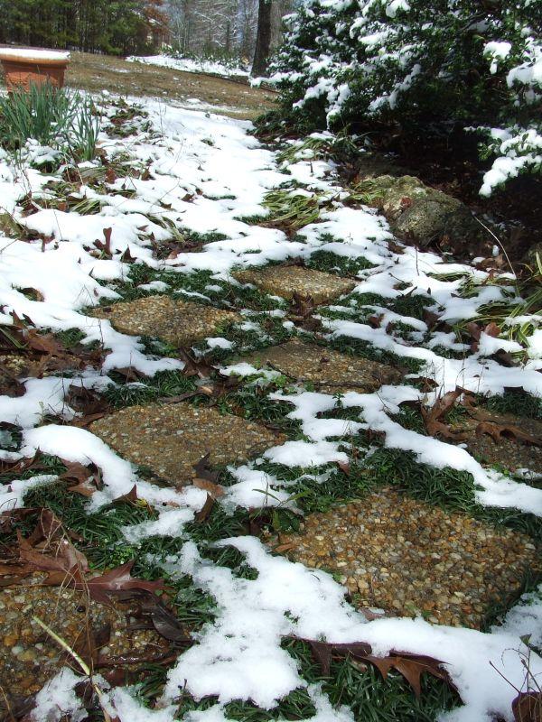 Pathway of Snow