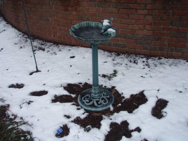 the frigid bird