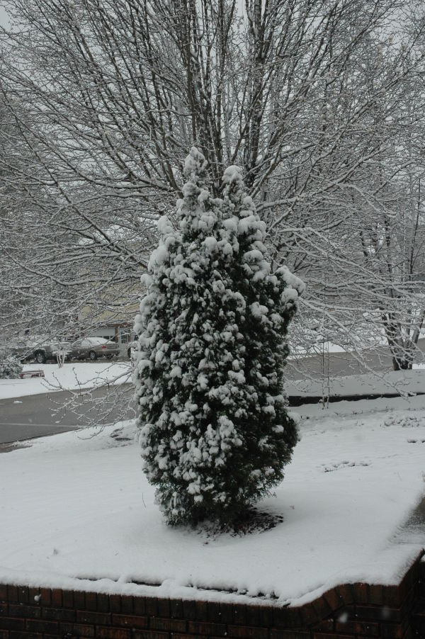 Winter is beautiful during the rare snowfall