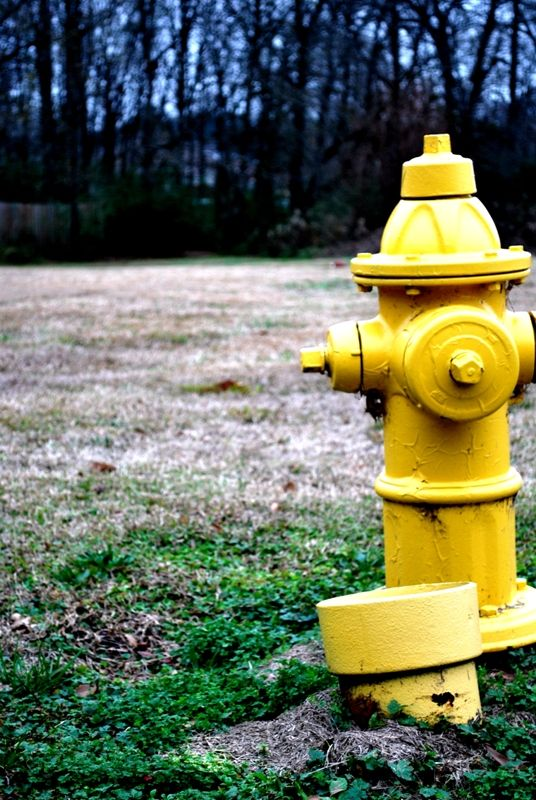 My Favorite Thing: Firehydrants.
