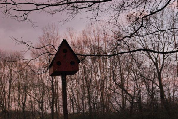 My Favorite Thing: Birdhouses.