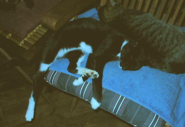 el diplomático duerme...