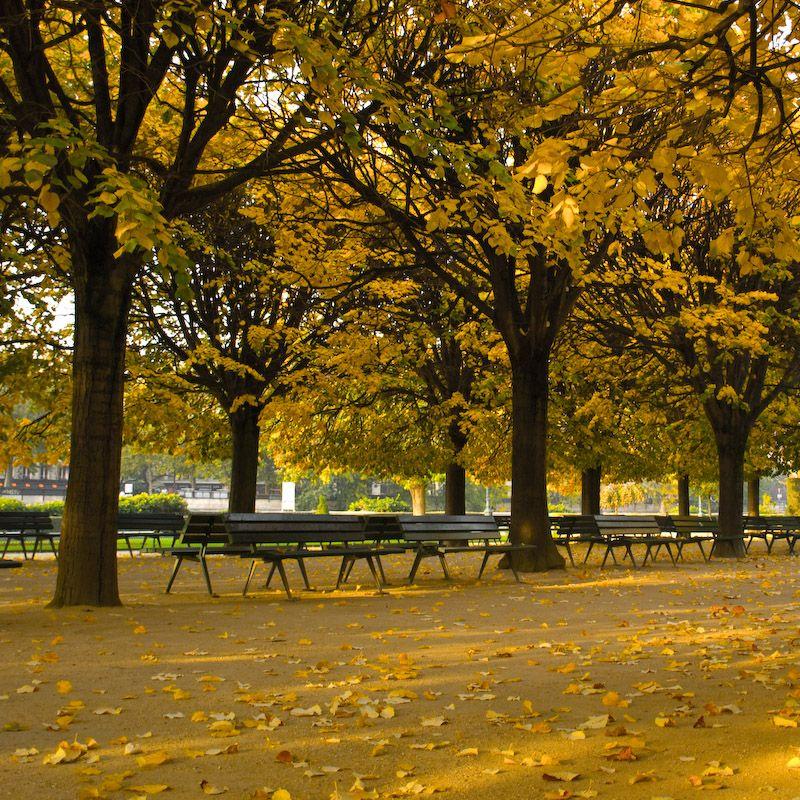 murmures d'automne  ...