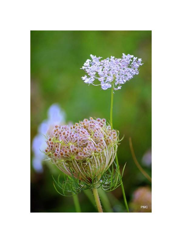 Diiferent plants co-existing